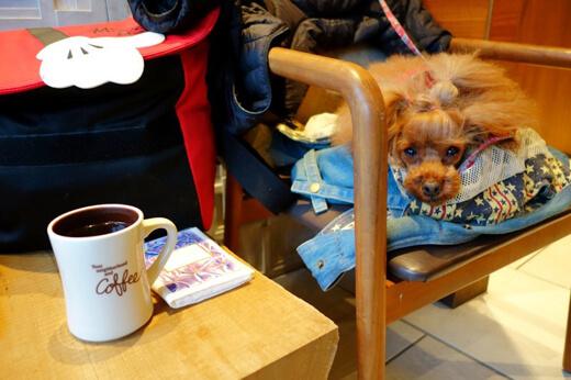 コーヒーとわんこ