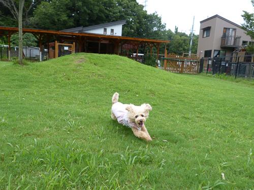 アクティブワンコが喜ぶ『ティンカーベルすずか ドッグカフェ』~三重県鈴鹿市