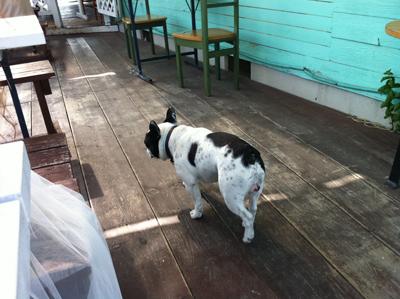 小空カフェの看板犬
