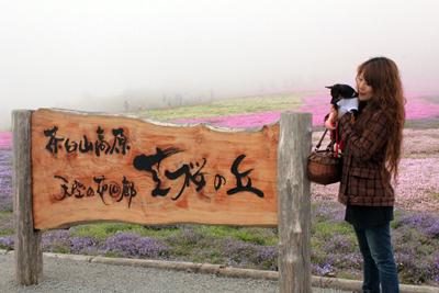 芝桜の丘看板