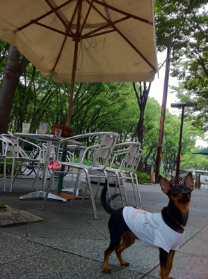 Panda Cafeテラス