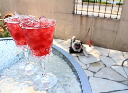 ドッグカフェ バリグ珈琲の食前酒