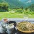 世界が認める絶景の名店、そば処『茶禅一』にワンコと行ってみよう!~愛知県新城市